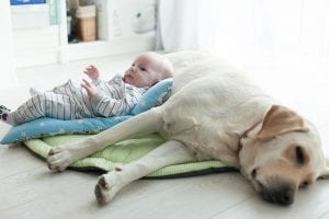 Building a Family; Introducing New Baby to Pets