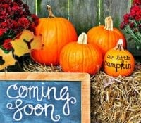 12 Fun Autumn Gender and Pregnancy Reveal Ideas 2