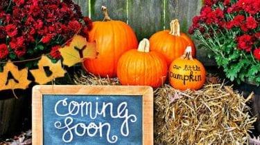 12 Fun Autumn Gender and Pregnancy Reveal Ideas 2