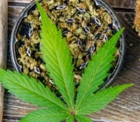 """Cannabis and Pregnancy: Why You Should Just Say """"No"""""""