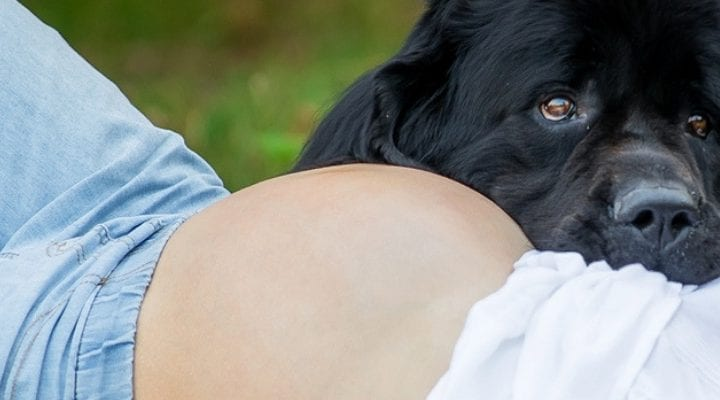 Pets and Your Pregnancy: Everything You Want to Know